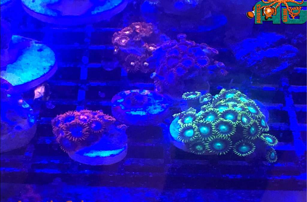 Paly-Zoa-Frags