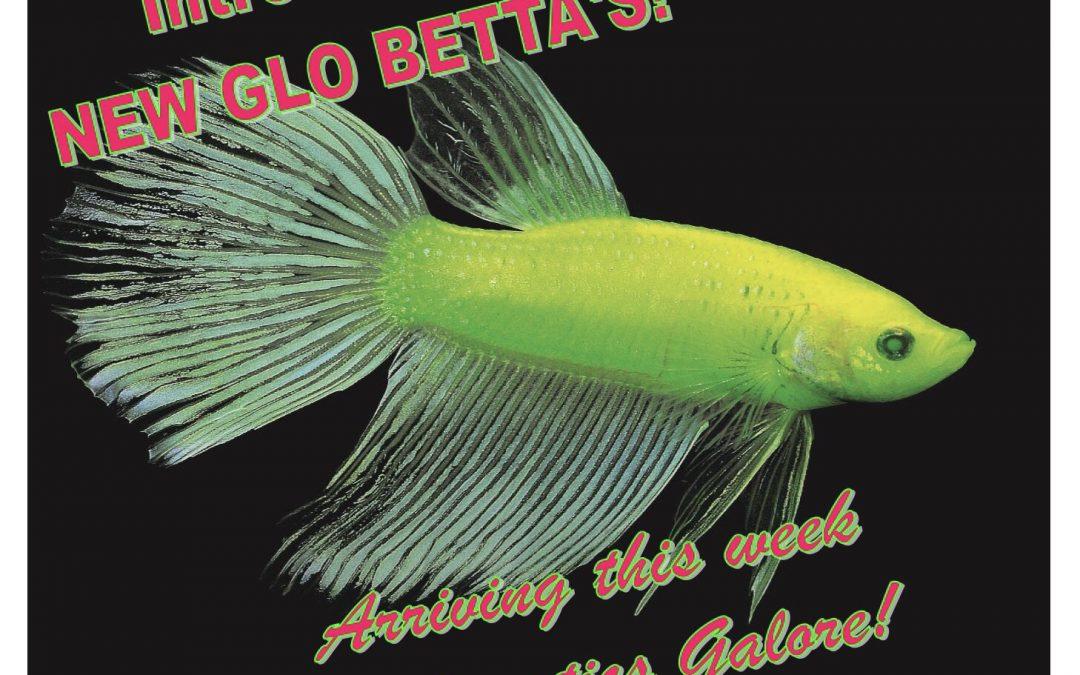 Introducing- Glo Bettas!